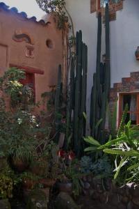 Courtyard Beauty