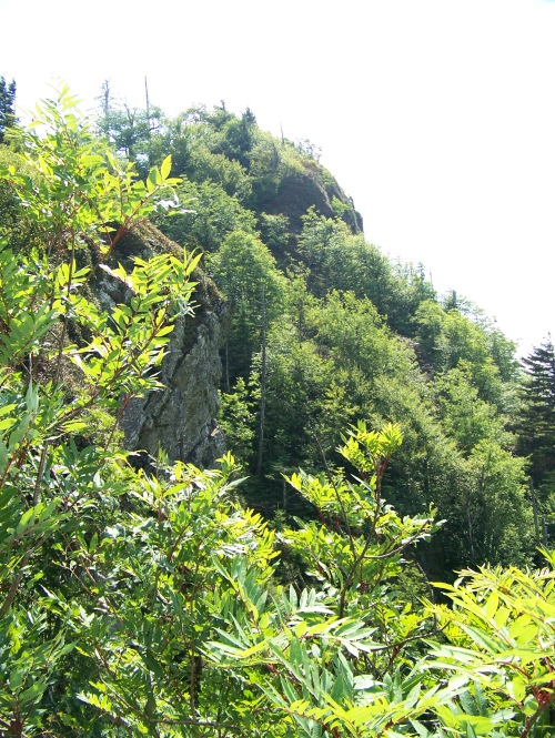 16-08-08 Smoky Mountians 077